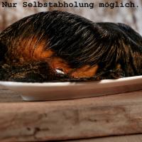 Barfgold Rinderohr mit Fell und Muschel